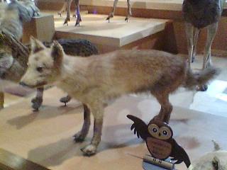 ニホンオオカミの画像 p1_9