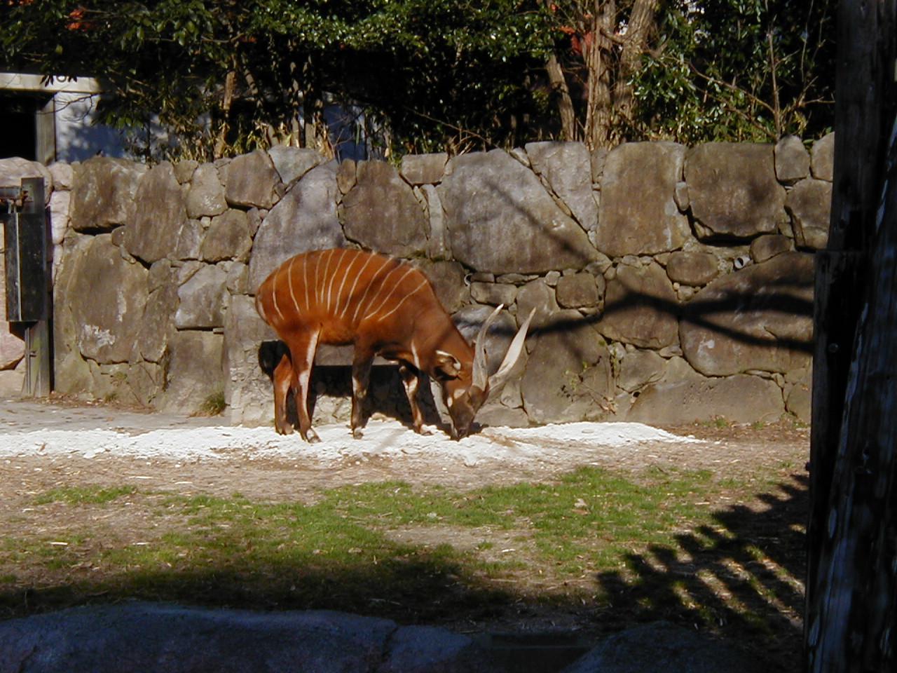 動物園 金沢 「横浜市立金沢動物園」見どころ・料金・アクセス・おすすめも!